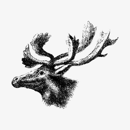 Drawing of moose Stockfoto - 117600594