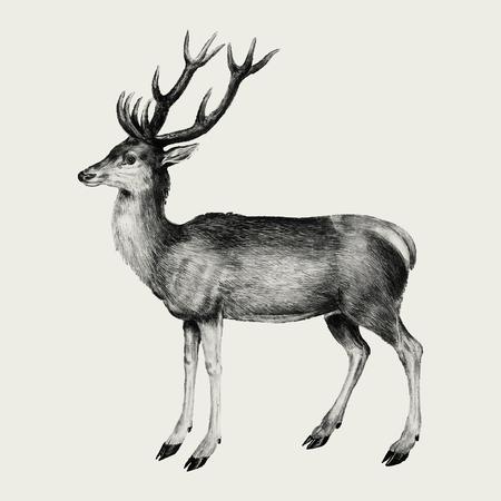 Illustration de cerf vintage en vecteur Vecteurs