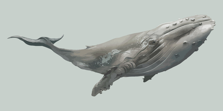 Floating isolated gray whale vector