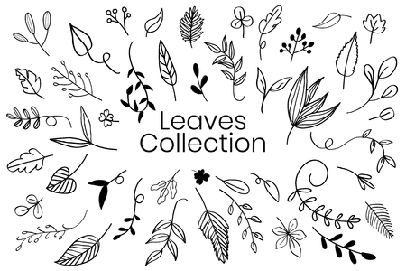 Various leaves doodle collection vector Çizim