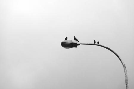 Birds sitting on a lamp post Stock fotó