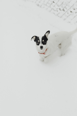 Dog walking in a snow covered garden