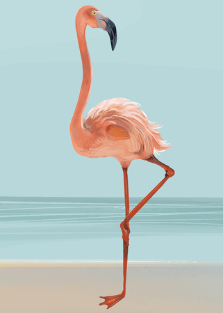 Pink flamingo on a beach vector Illustration