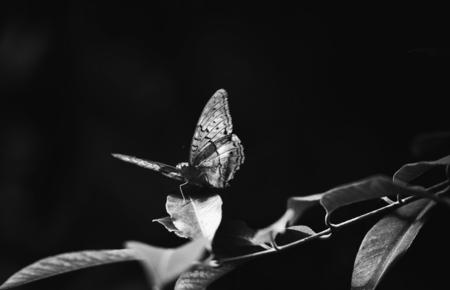 Closeup of a small tortoiseshel on a leaf