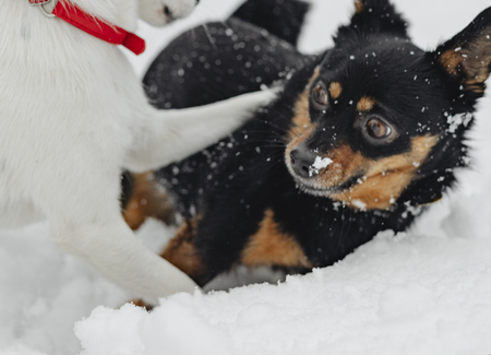 Dogs playing in a snowy park Stockfoto
