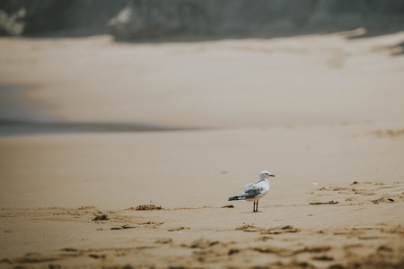 Closeup of seagull at the beach Imagens