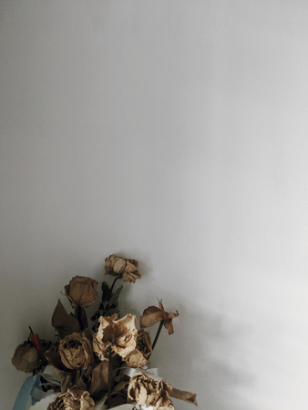 Dried roses by the wall Stock Photo