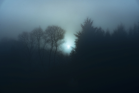 View of a misty forest at night