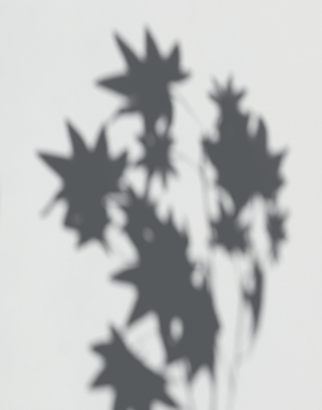 Shadow of Maple leaves on a white wall Imagens