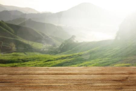 Bosque verde y piso de madera.