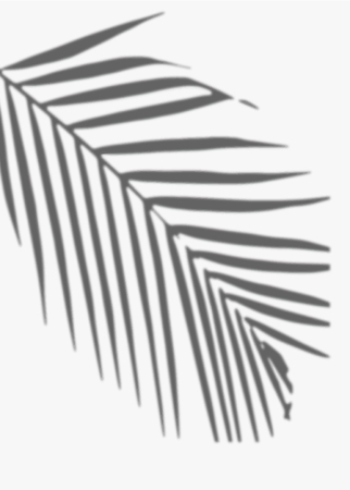 Shadow of palm leaves on a white wall