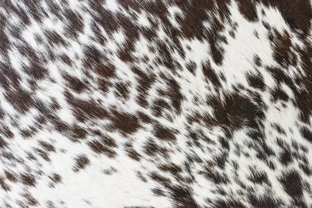 Strukturierter Hintergrund aus braunem und weißem Kuhfell