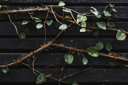 plant vines on a dark wall background