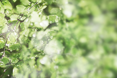 Green leaves with water drops background Stock Photo