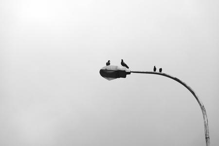 Birds sitting on a lamp post 写真素材