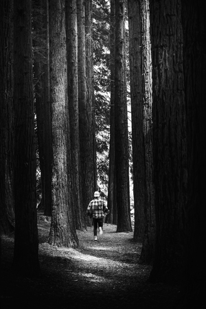 Lost man running in a pine forest