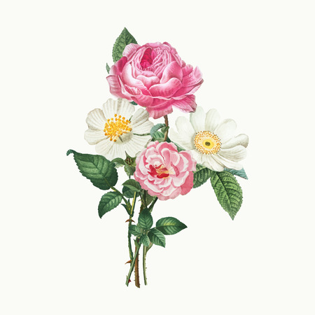 Vintage pink and white roses, vector illustration