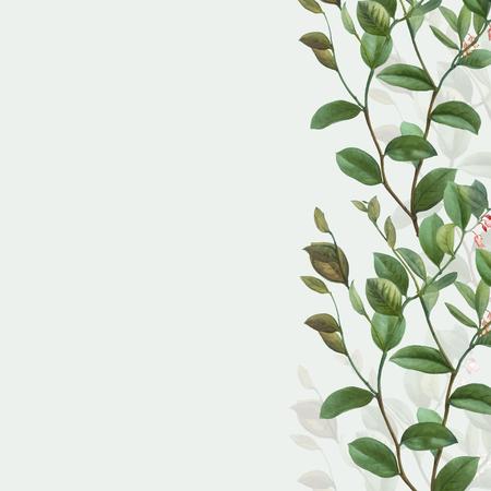 Vintage botanical frame design vector Çizim
