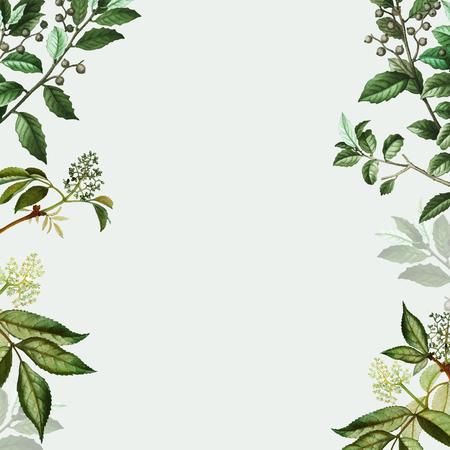 Vettore di disegno del telaio botanico vintage