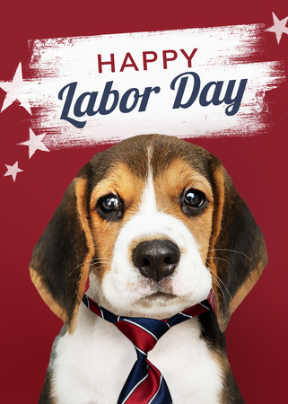 Happy labor day from cute Beagle