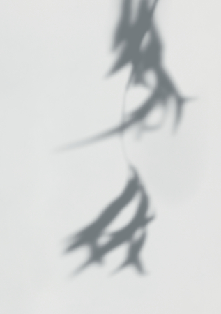 Shadow of leaves on a wall