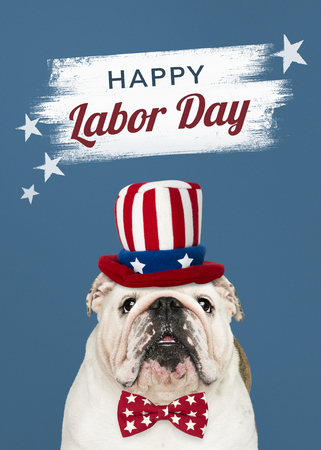 Happy labor day from a cute white English Bulldog puppy Banco de Imagens - 122424222