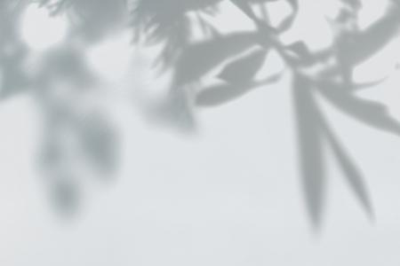 Sombra de hojas en una pared. Foto de archivo