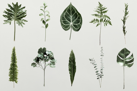 Green foliage set on pearl gray background Stock Photo