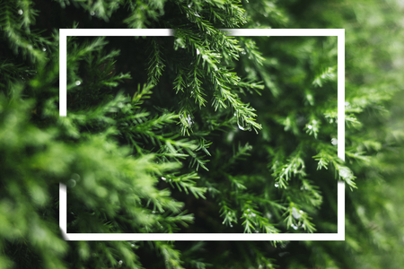 White frame on a green background