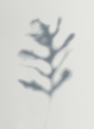 Shadow of leaves on a wall Reklamní fotografie - 123234358