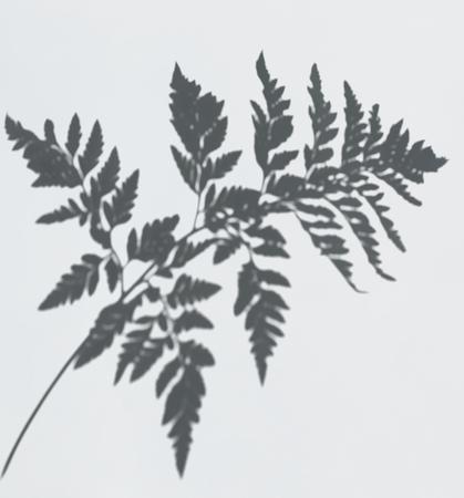 Shadow of a fern leaf on a white wall Reklamní fotografie - 123234381