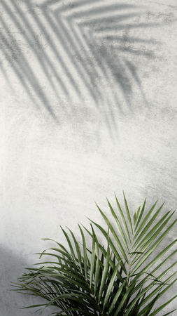 Areca palmschaduwen op een grijze muur Stockfoto