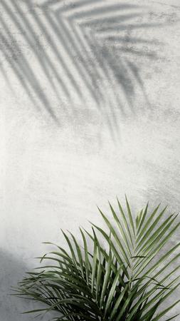 Sombras de palmeras areca sobre una pared gris Foto de archivo