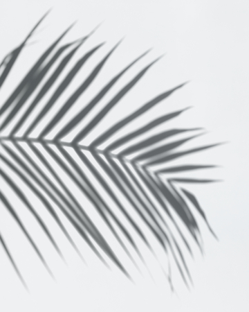 Shadow of palm leaves on a white wall Reklamní fotografie - 123234660