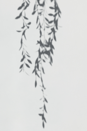 Shadow of leaves on a white wall