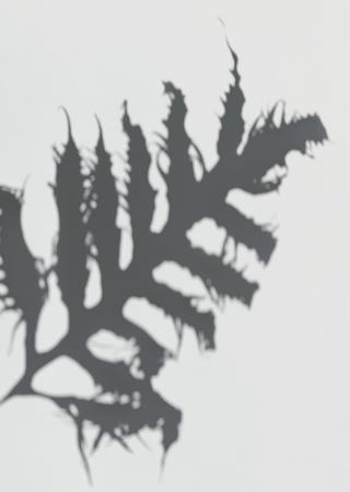 Shadow of a Leatherfern leaf on a white wall Reklamní fotografie - 123592033