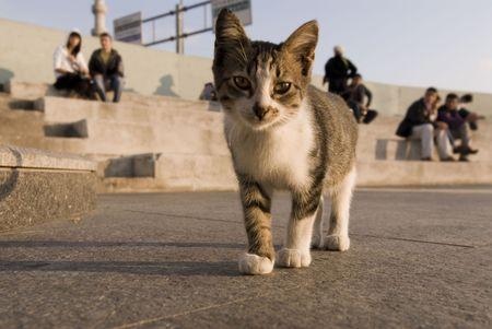 beautiful cat Stock Photo - 3509046
