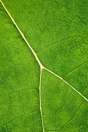 green leaf details photo