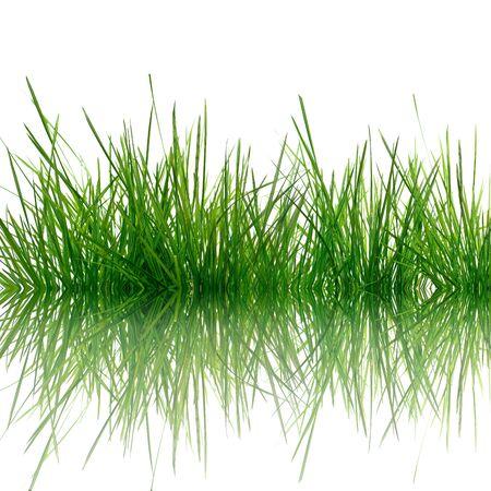 Grass Stock Photo - 4037575
