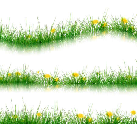 grass Stock Photo - 4815147
