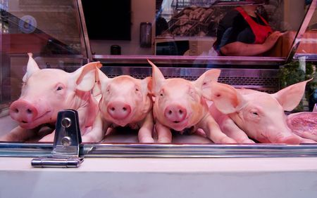 pigling: pigling Stock Photo