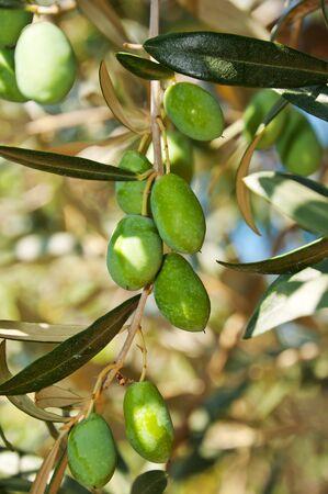 Olives  photo