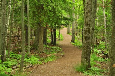 orientated: Woodland Hiking Trail (Landscape Orientated) Stock Photo