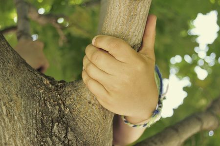 grasping: Childs Hand Holding On Tree Branch