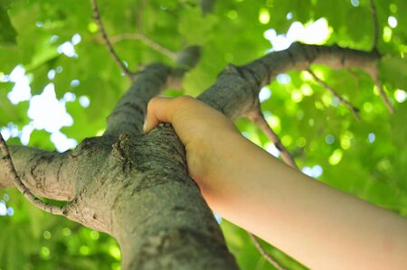 grasping: Childs Hand Grasping Tree Limb