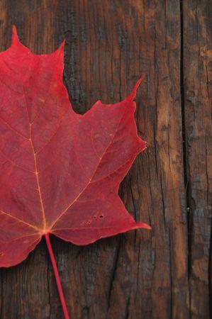 Red Maple Leaf On Burnt Drift Wood