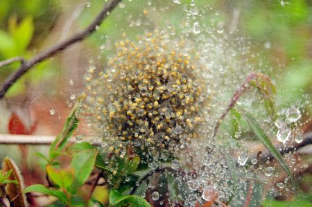 Spiders Nest