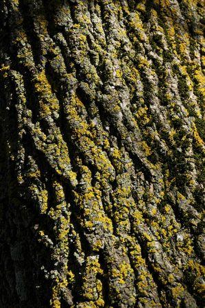 alder tree: Tag Alder Tree Bark Stock Photo