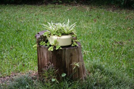 Plant on stump
