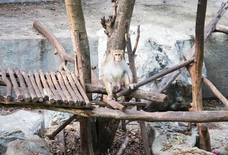 cute monkey at the zoo photo